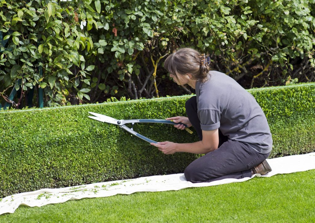hedge-services